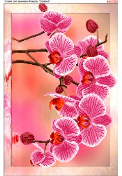 Орхідея (3092)